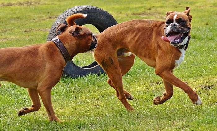 Pravila ponašanja u psećim parkovima