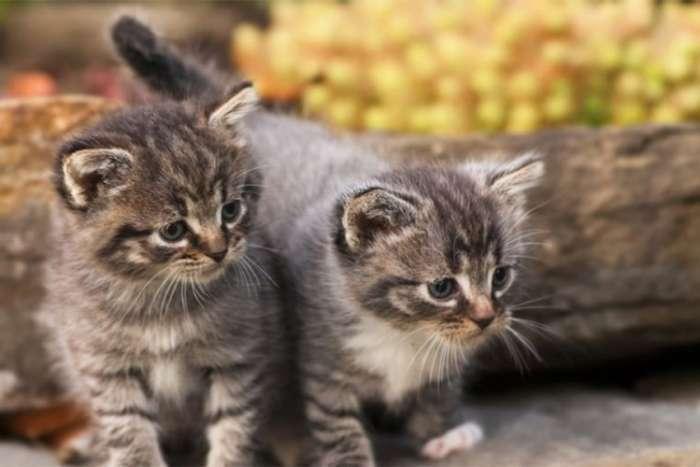 Kako prevazići fobiju od mačaka?