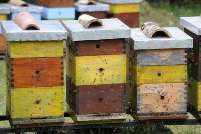 Niske temperature zadaju glavobolju pčelarima: Hladnoća pustoši košnice