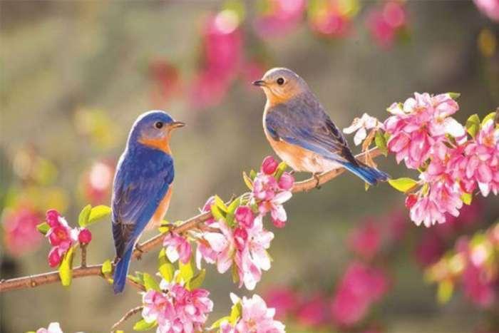 Danas počinje proljeće