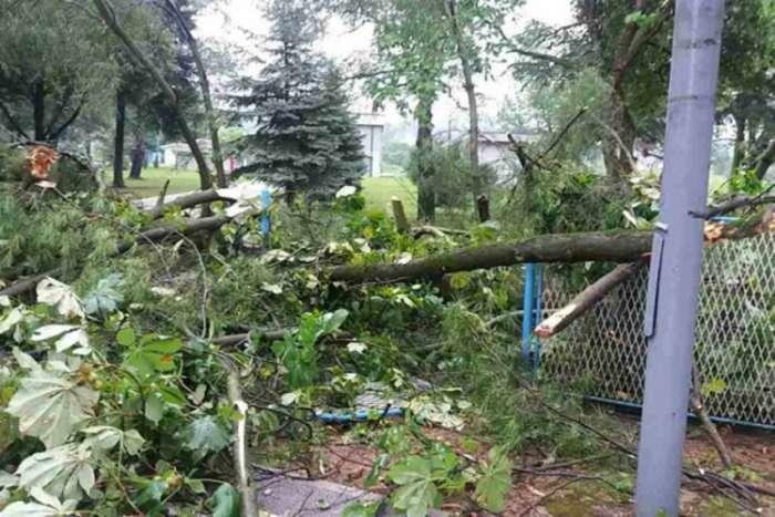 U Doboju olujno nevrijeme obaralo stabla i lomilo grane (VIDEO)