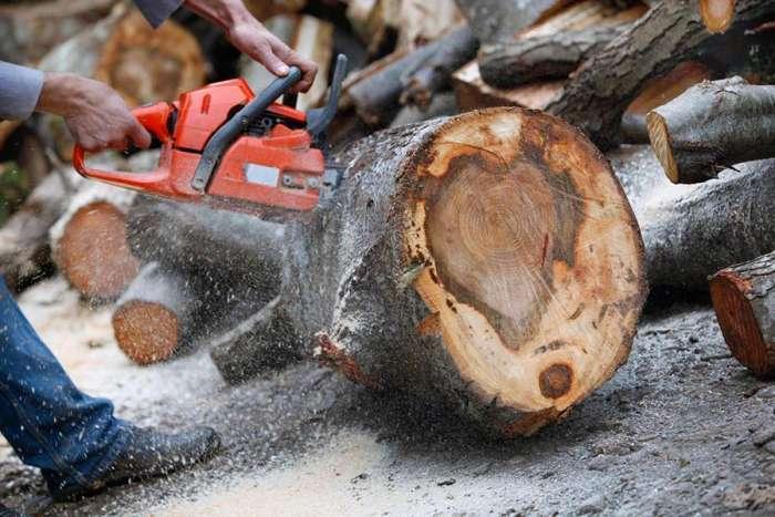 Znate li zašto ljudi kucaju o drvo za sreću?