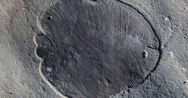 """Pronađen """"sveti gral"""": Riješena 558 miliona godina stara misterija"""