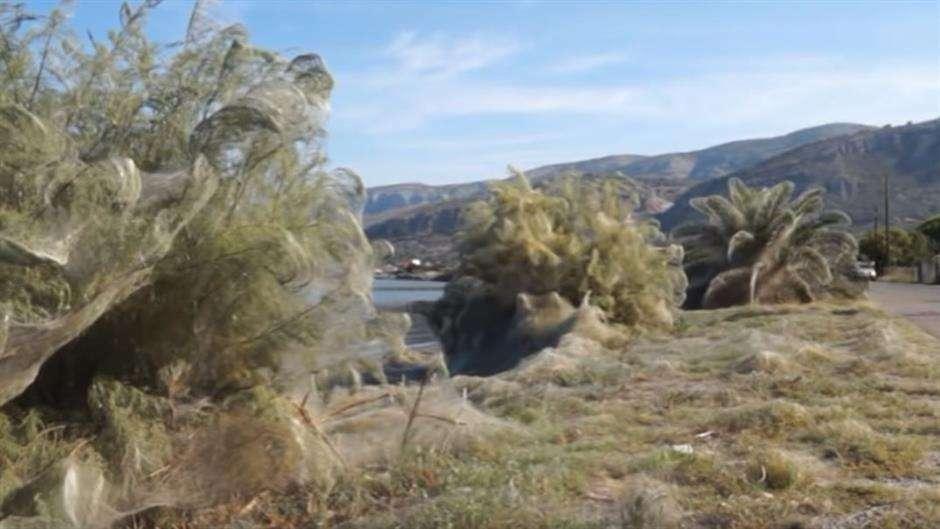 Velika paukova mreža prekrila cijelu plažu u Grčkoj (VIDEO)