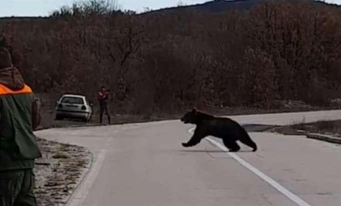 Ne spava zimski san: Medvjed istrčao pred lovce!