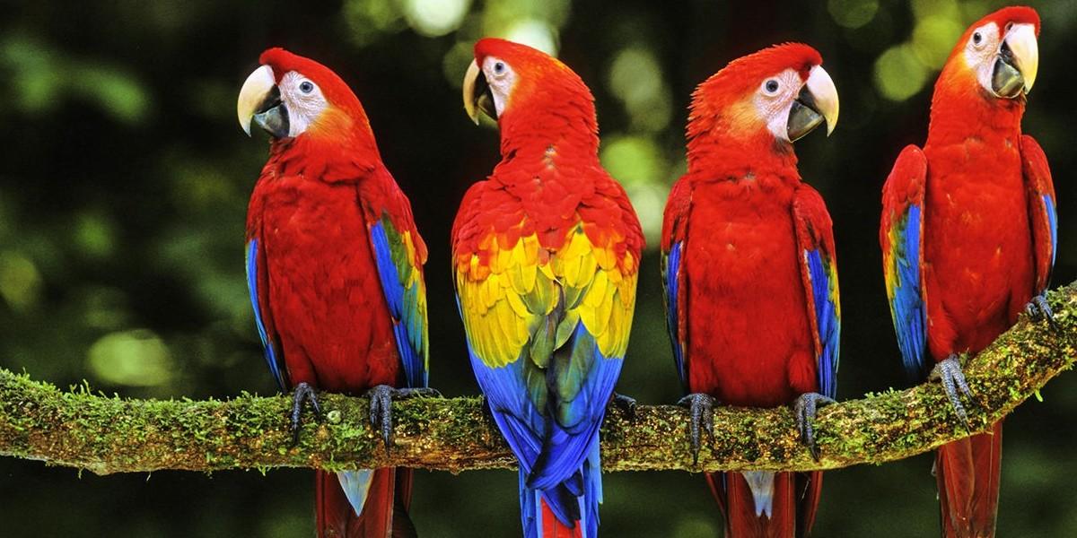 Šta papagaj smije da jede, a šta ne?
