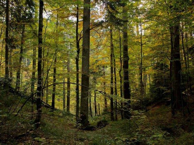 Prašumu Јanj UNESKO proglasio prirodnim dobrom od svjetskog značaja