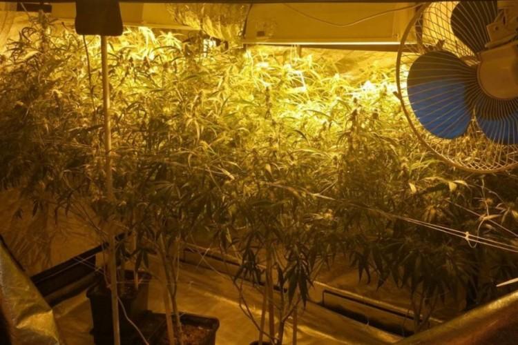Otkrivena laboratorija za proizvodnju marihuane, policija objavila snimak