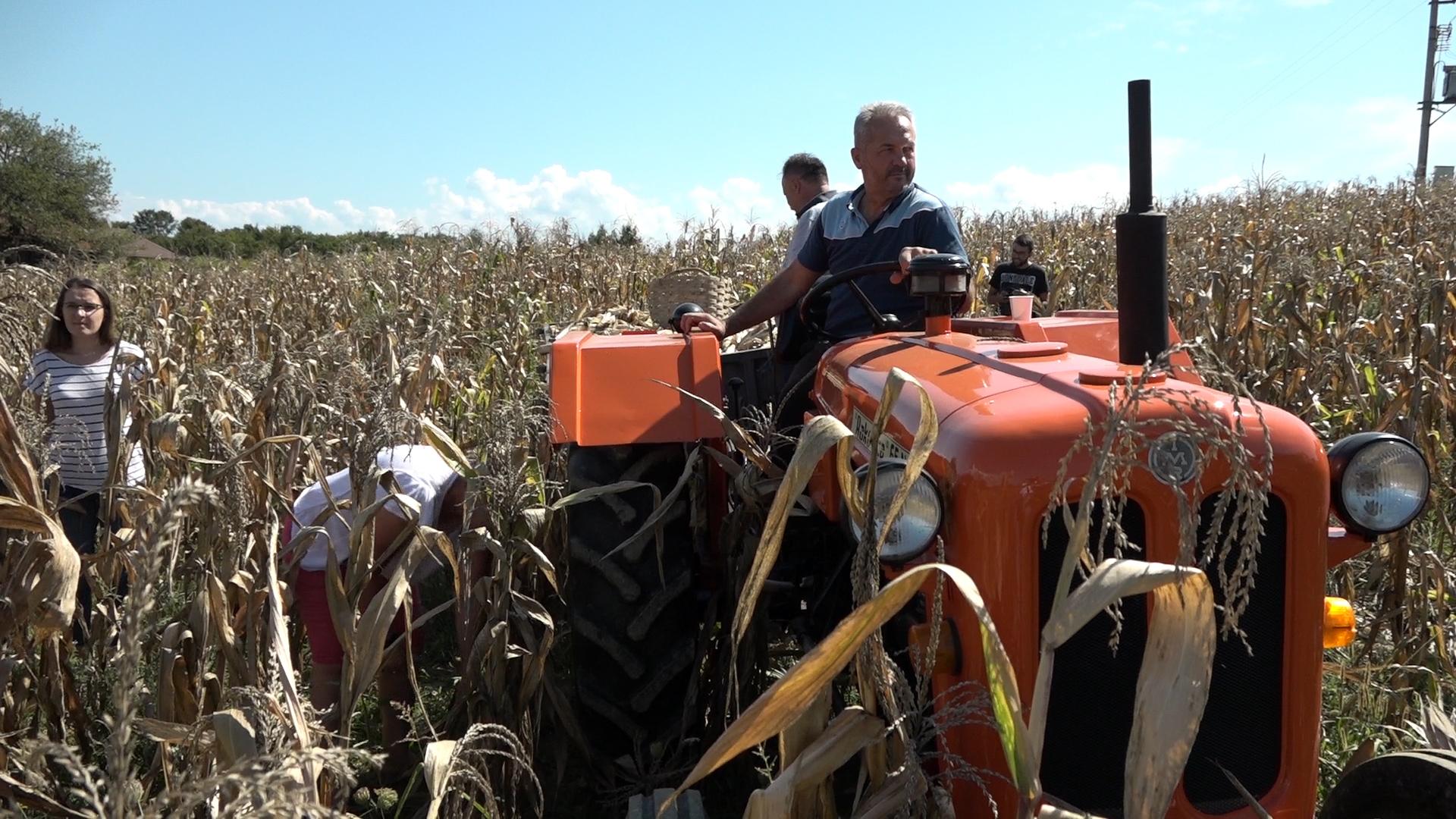 PUT NAS DOVEO: U Velikoj Ilovi kod Prnjavora kao nekada berba i perušanje kukuruza – 19.09.2021.