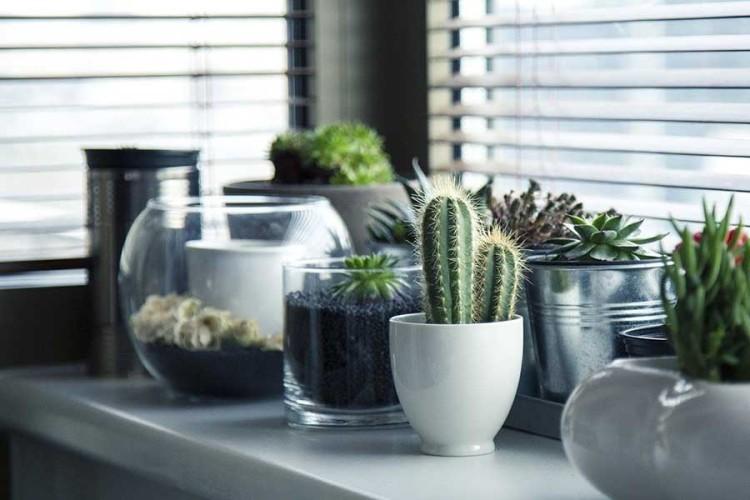 Ove biljke će privući sreću i novac u vaš dom