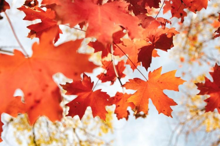 Jeste li znali zašto lišće mijenja boju na jesen?